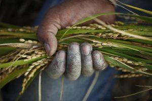 Agricoltura Hi Tech per salvare il clima